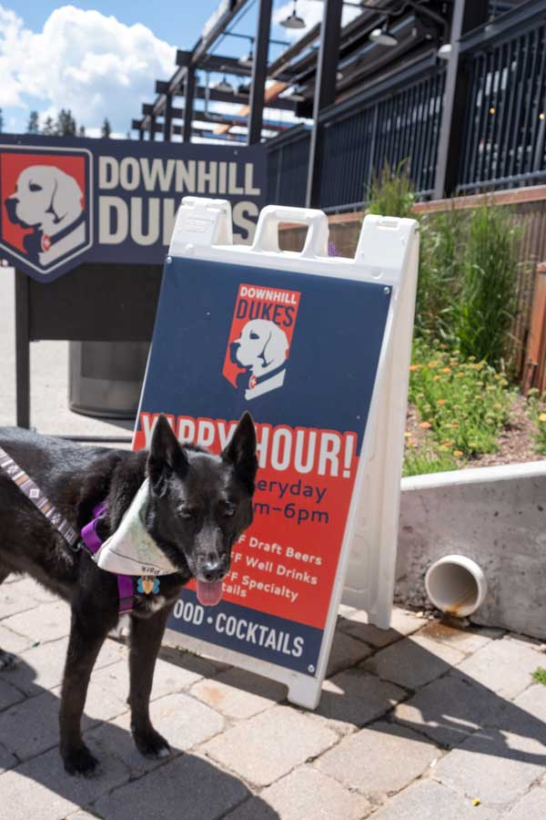 Dog in front of Downhill Duke's