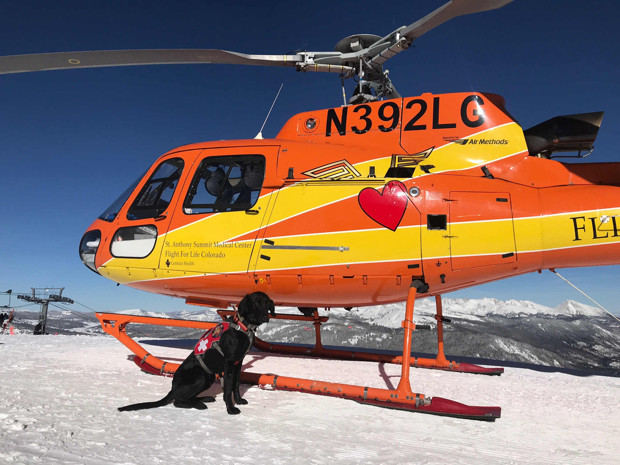 Avalanche dog Baloo posing with the Flight for Life helicopter